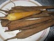 palm-beet