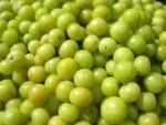 amla-fruit-2