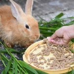 loss-appetite-rabbits