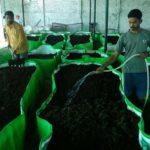 earthworm-farming-techniques